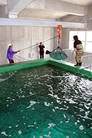 沖縄県水産海洋技術センター石垣支所が新設した大型ハタ類研究用の大型水槽=17日午後、同センター敷地内
