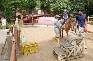 子どもたちの体験乗馬に貢献する与那国馬。異郷の地で人気を集めている=22日、静岡県三島市立公園楽寿園(与那国町提供)
