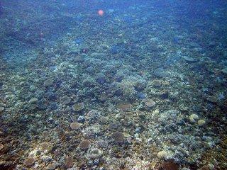 補足調査で白化現象などが確認された石西礁湖のサンゴ礁(上野光弘氏撮影)