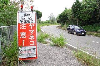 イリオモテヤマネコの事故防止を呼び掛ける立て看板。竹富町が2019年度中の交通事故対策条例制定を目指している=11月29日、中野の県道215号線沿い