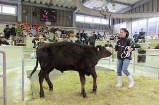 県内8市町で最初のセリとなった黒島家畜市場。127頭が取引され、平均価格は74万円台の高値となった=13日午前