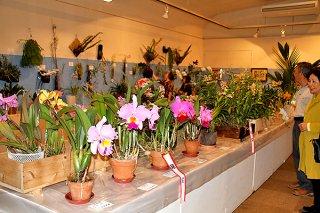 会員10人の作品137点を紹介している第45回花と緑のラン展示会=16日午後、市民会館展示ホール