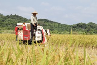 期米の生産増で1005㌧の豊作となった2018年度水稲=2018年5月24日、川平前岳ふもとの水田