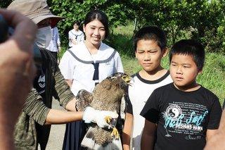 交通事故から回復し放鳥されたカンムリワシ「トミージュニア」=8日午前、富野小中学校裏の畑(環境省石垣自然保護管事務所提供)