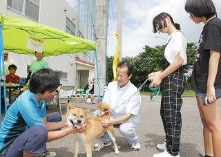 2日から始まった石垣市の2019年度狂犬病予防集合注射。飼い主が連れてきた愛犬に獣医師が注射をする=2日午前、石垣市中央運動公園内
