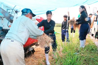 雨の降る中、酒造りに使うこうじ用の米を脱穀する生徒たち=11日午前、名蔵地区の水田