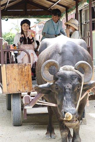 水牛車の出発を楽しみに待つ車いすモデルの日置有紀さん(左)=1日午前、竹富島