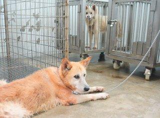 犬の殺処分件数が大幅に減った八重山保健所。現在、2頭の犬が収容されている=23日午後、同保健所