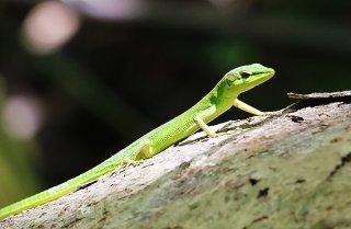 種の保存法に指定されたサキシマカナヘビ(2019年6月29日撮影)