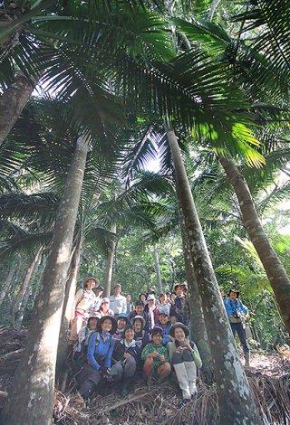ウブンドルのヤエヤマヤシ群落を観察した参加者ら=24日午前、西表島