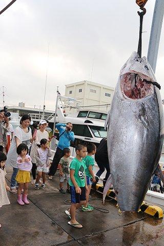 今期初めて水揚げされた体長241㌢、体重309㌔のクロマグロ=26日午前、八重山漁協
