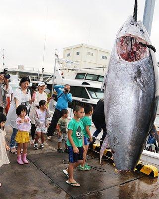 沖縄県の漁獲枠が拡大されたクロマグロ。漁業者には安堵の声が広がっている=3月26日、八重山漁協