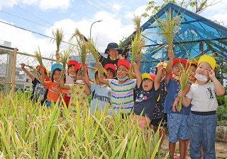刈り取った稲を手にするあまかわ幼稚園の園児ら=4日午前、八島小学校