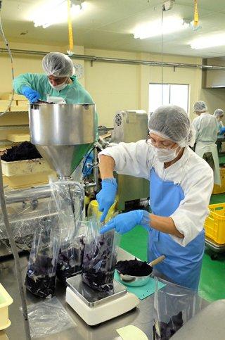 ペースト状にした沖夢紫を袋詰めにしていくスタッフ=12日午前、真栄里の南風堂㈱ペースト工場
