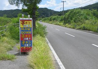 ヤマネコの交通事故が多発している湿地内の県道(高相徳志郎代表提供)