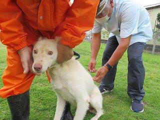 石垣市の狂犬病の予防集合注射が始まり、2日間で124頭が予防接種を受けた=28日午後、双葉公民館