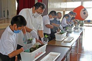 児童らが「人権の花」運動でニチニチソウの苗をプランターに植えた=7日午後、白保小学校