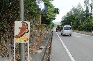 大本小学校前に設置されている「カンムリワシとび出し注意」の看板。数十㍍先の山林で沖縄防衛局が宿舎建設を計画している=30日午後