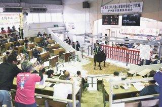 2020年の子牛セリは八重山、黒島ともコロナ禍の煽りを受け平均価格が12~14万円下落した=2020年1月13日、八重山家畜市場の初セリ