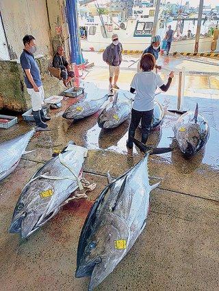26本のクロマグロが水揚げされた=4月30日午前、八重山漁協