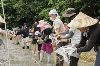 稲の苗を育てるため、苗代に種をまく参加者ら=4日午前、名蔵シーラ原の水田