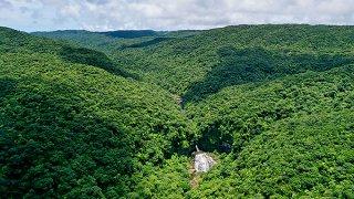 常緑照葉樹林が広がり豊かな生態系を育む西表島。国内5件目の世界自然遺産に登録された=6月11日