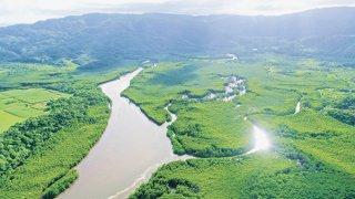 世界自然遺産に登録された西表島。島の9割が亜熱帯の原生林に覆われている。仲間川には河口にかけて日本最大規模158㌶のマングローブ林が広がる=6月11日、西表島仲間川