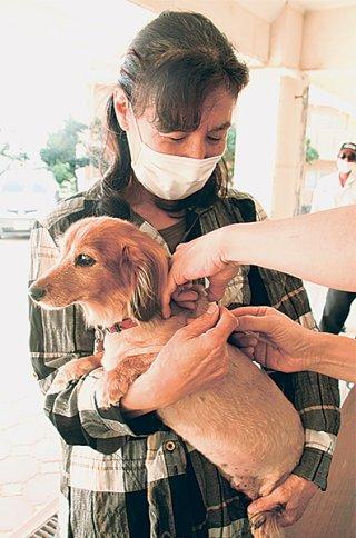 石垣市の狂犬病予防集合注射が始まり、愛犬に予防注射を受けさせる市民=19日午後、平得公民館